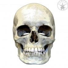 Smrtka - kartónová maska pre dospelých