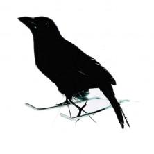 Vrana čierna 15cm