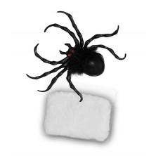 Pavúk s pavučinou